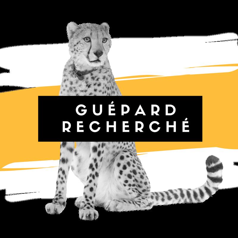 Guepard-recherche